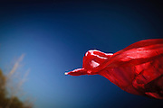Flying Red Scarfe