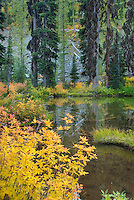 Fall color dotting the shore of a sub-alpine lake. Okanogan National Forest Washington USA