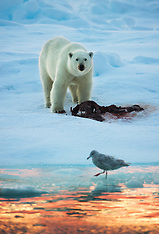 Svalbard #11 2010