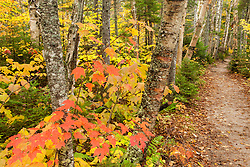 The Zealand Trail in fall. White Mountain National Forest, New Hampshire.