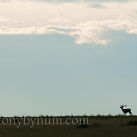 conservation photography - montana wild prairie