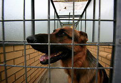 UK ENGLAND LONDON 3MAR09 - A lone dog in a kennel awaits pick-up by its owner at the Heathrow Animal Reception Centre, run by the City of London Corporation. The Heathrow Animal Reception Centre - formerly known as the Animal Quarantine Station - is part of the Veterinary Sector of the City of London Environmental Services Directorate and has over the past 25 years established itself as a world leader in the care of animals during transport...jre/Photo by Jiri Rezac..© Jiri Rezac 2009