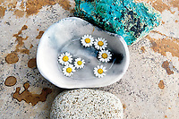 Bright daisies float in light reflecting water held by an abstract concrete grey bowl.