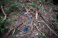 A tie lies on the ground in Aokigahara Jukai , better known as the Mt. Fuji suicide forest