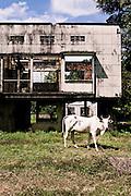 Abandoned villa near Knai Bang Chatt. Kep, Cambodia