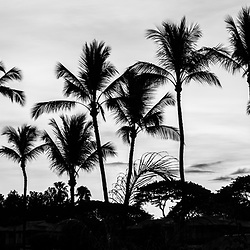 Maui Hawaii Wailea Makena palm trees sunrise black and white panorama photo. Panoramic photo ratio is 1:3. Copyright ⓒ 2019 Paul Velgos with All Rights Reserved.