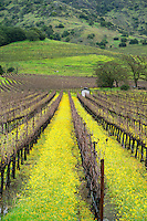 Stag's Leap District AVA in Late Winter, Napa Valley, California