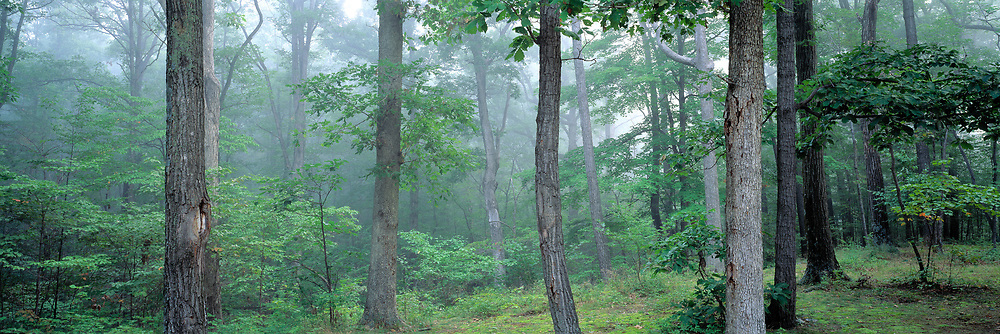 Mist fills the forest at Rocky Gap State Park, Maryland.
