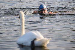 © Licensed to London News Pictures. 15/09/2016. London, UK. A woman swims past a Swan in Hyde Park in early morning sunshine. Another exceptionally warm Autumn day is expected today in parts of the United Kingdom. Photo credit: Ben Cawthra/LNP