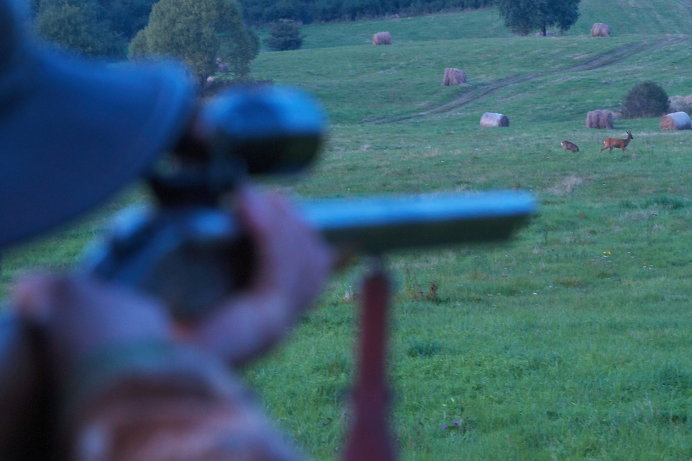 Hunter silhouette with the rifle at the ready aiming at two Roe deer (Capreolus capreolus) on a meadow near Leszczowate, Bieszczady region, Poland.