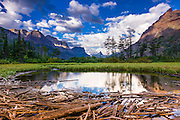 Driftwood and pond, Saint Mary Lake, Glacier National Park, Montana USA