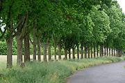 Kassel, Germany. Opening days of documenta14.<br /> Some of Joseph Behufs' 7.000 oaks.