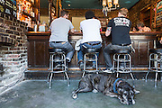 Lou Reed, a bull mastif, enjoys the cool floor at Bar Tonique, in New Orleans.