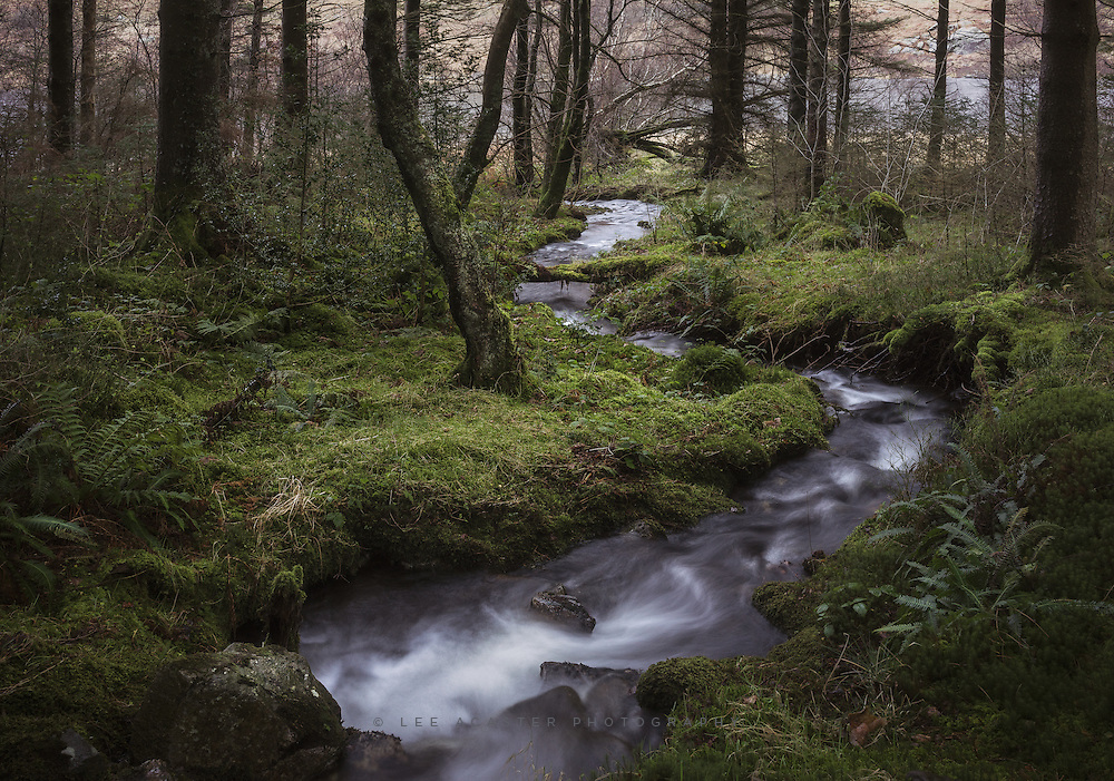 Some wet Welsh woodland