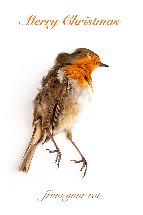 Christmas card wiht dead robin