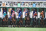 November 1-3, 2018: Breeders' Cup Horse Racing World Championships. Horses break from the gate in the Juvenile Fillies Turf G1