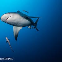 Alan Egan bull sharks 01-31-2016