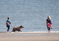A dog enjoys a paddle in the sea on Portobello Beach in Edinburgh during a sunny first day of Autumn.<br /> <br /> Edinburgh Weather Pictures, Thursday 22nd September 2016<br /> <br /> (c) Alex Todd | Edinburgh Elite media