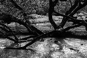 LUNUGANGA.<br /> Black Pond in drizzle