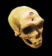 The Neanderthal an extinct member of the Homo genus that is known from Pleistocene specimens found in Europe and parts of western and central Asia. Neanderthals are either classified as a subspecies (or race) of humans (Homo sapiens neanderthalensis) or as a separate species (Homo neanderthalensis).
