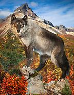 Robert Wise Blue Wolf