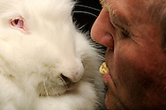 Rabbit breeder Josef Sutter offers his angora rabbit feed  out of his mouth. The 61-year old Mr. Sutter holds rabbits for 50 years. A life without them is difficult for him to imagine. Every morning, leads his first course in the rabbit hutch. Freiburg, Germany / Kaninchenzuechter Josef Sutter bietet seinem Angorakaninchen Futter aus dem Mund an. Der 61-jaehrige Herr Sutter haelt seit 50 Jahren Kaninchen. Ein Leben ohne sie ist fuer ihn schwer vorstellbar. Jeden Morgen fuehrt sein erster Gang in den Kaninchenstall. Freiburg, Deutschland