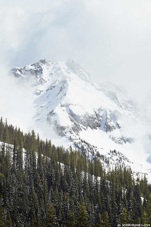 A wintery Rocky Mountain peak shrouded in fog with pine trees on a foreground slope.