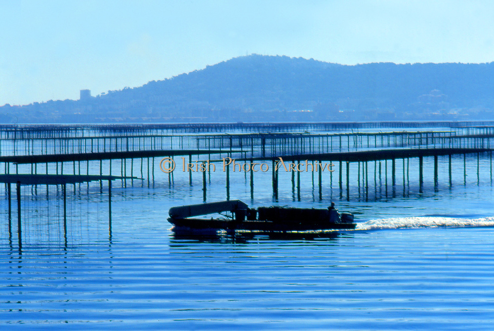 France, Languedoc and Roussillon.  Meze.  Mussel farming.