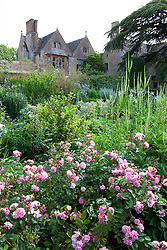 View towards the house from The Old Garden at Hidcote Manor. Rosa 'Cornelia' in the foreground