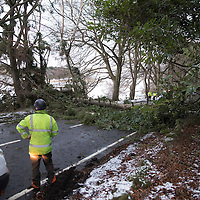 Tayside Contract workers clear a fallen tree from the A91 Milnathort to Stirling Road at Yetts o Muckart in Perthshire as the recent spell of bad weather continues…13.01.17<br />