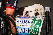 Cyclist and dog in side car, Santa Barbara, California USA
