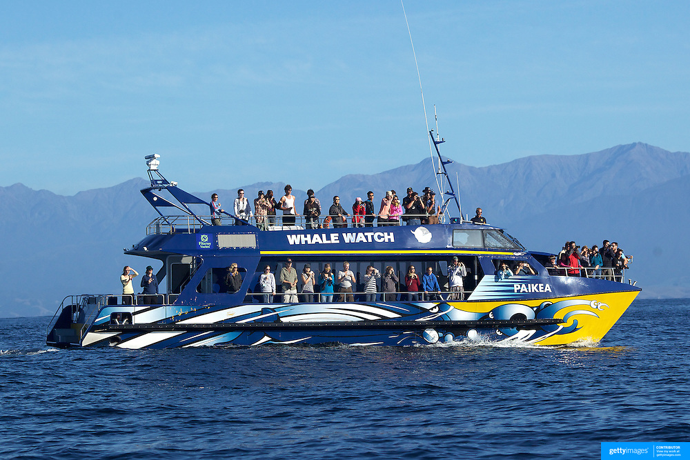 A Whale Watch boat full of tourists viewing the Giant Sperm Whales off the coast of Kaikoura..Whale Watch is New Zealand's only marine-based whale watching company offering visitors an exciting up-close encounter with the Giant Sperm Whales at all times of the year and is one of New Zealand's star attractions. Whale Watch scheduled tours operate daily from the town of Kaikoura , two and a half-hours  north of Christchurch in New Zealand's South Island. Kaikoura  has lush pastures and towering, snow covered peaks that fall to the sea. Offshore a deep undersea canyon combines with unusual sea currents to attract an extraordinary abundance of marine life, the most famous being the Sperm Whale. Whale Watch, Kaikoura, New Zealand, 15th February 2011, Photo Tim Clayton.