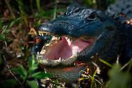Everglades: Shark Valley