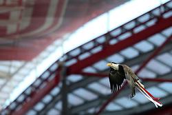 13.04.2016, Estadio da Luz, Lissabon, POR, UEFA CL, Benfica Lissabon vs FC Bayern Muenchen, Viertelfinale, Rueckspiel, im Bild Der Adler fliegt im Stadion // during the UEFA Champions League quarterfinal, 2nd Leg match between Benfica Lissabon and FC Bayern Munich at the Estadio da Luz in Lissabon, Portugal on 2016/04/13. EXPA Pictures © 2016, PhotoCredit: EXPA/ Eibner-Pressefoto/ Langer<br /> <br /> *****ATTENTION - OUT of GER*****