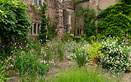 Lupinus arboreus and Dierama pulcherrium on the terrace garden at Cothay Manor, Greenham, Wellington, Somerset, UK