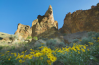 Balsamroot flowers beneath spires and rock formations made of volcanic tuff in Leslie Gulch in the Owyhee Uplands of SE Oregon