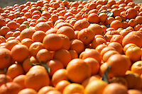 Pile of oranges close-up