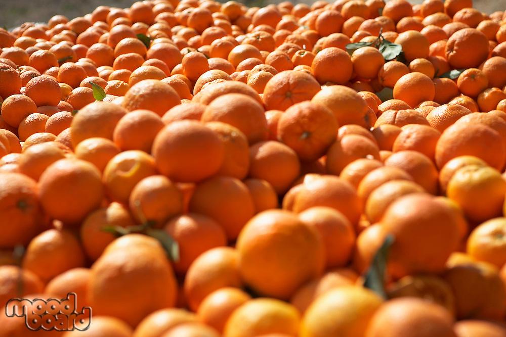 Pile of oranges close-up