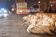 LIUZHOU, CHINA - AUGUST 27: (CHINA OUT) <br /> <br /> Selling Ducks On the street in China<br /> <br /> Ducks are put on the street for sale on early morning of Zhongyuan Festival on August 27, 2015 in Liuzhou, Guangxi Province of China. Zhongyuan Festival, also known as Ghost Festival, Hungry Ghost Festival or Yu Lan Jie in Chinese, is a traditional Buddhist and Taoist festival held in Asian countries. In Chinese culture, the fifteenth day of the seventh month in the lunar calendar is called Ghost Day and the seventh month in general is regarded as the Ghost Month, in which ghosts and spirits, including those of the deceased ancestors, come out from the lower realm. While normally Guangxi people celebrate the festival on the fourteenth day and eating ducks is a traditional custom in local residents. <br /> ©Exclusivepix Media