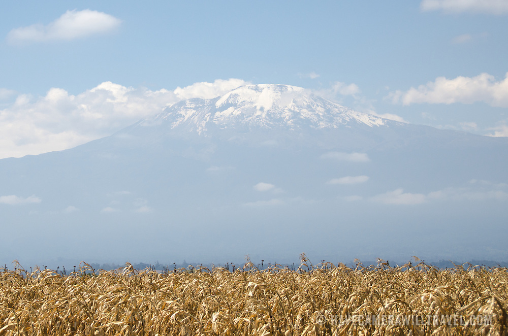 The summit (Kibo Summit) of Mt Kilimanjaro seen from the distance below, with its snow and partly covered in clouds. In the foreground is a corn field.