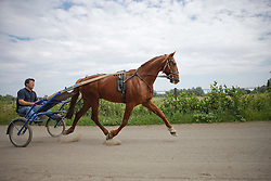Dravers fokkerij Joris De Brabander<br /> Stal de Muze - SInt Niklaas 2011<br /> © Dirk Caremans