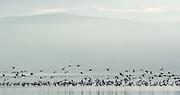 Flamingos at dawn in Lake Nakuru, Kenya
