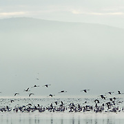 Flamingos at dawn in Lake Nakuru, Kenya