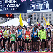 The runners in the elite men's division at the start of the 2012 Cherry Blossom 10-Miler, the 40th running of the race that is run every spring in Washington DC to coincide with the National Cherry Blossom Festival. The course starts near the Washington Monument, heads over Memorial Bridge and back, goes up under the Kennedy Center, around the Tidal Basin and past the Jefferson Memorial, and then does a loop around Hains Point back to the finish near the Washington Monument.