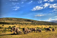 Masai Mara Serengeti East Africa
