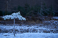 Frozen Pine Tree On Field Against Cloudy Sky During Winter