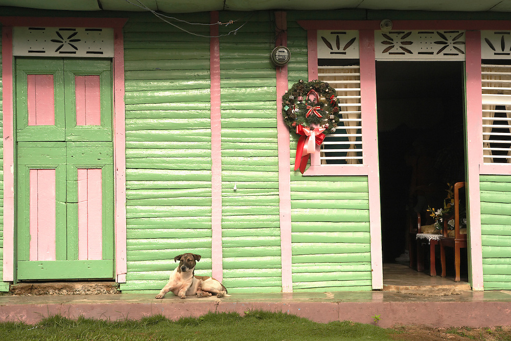 Dog and house with Christmas decorations, Punta Cana, Dominican Republic
