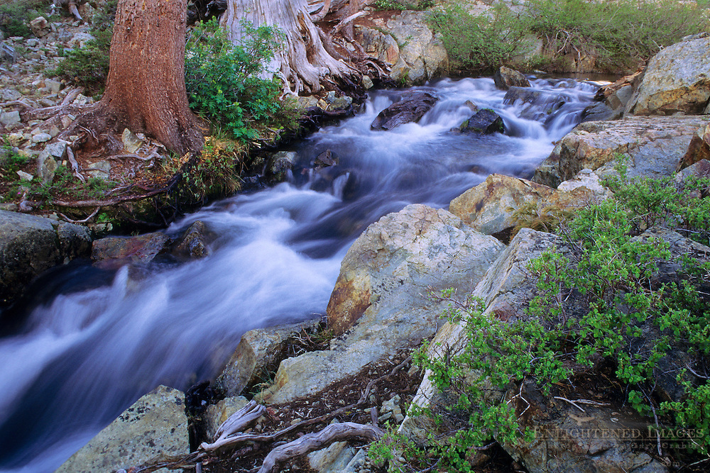 Stream near the outlet of Half Moon Lake, Desolation Wilderness, Tahoe Sierra Nevada mountains, California