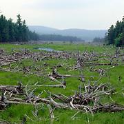 Seboomook Lake in Northern Maine, USA