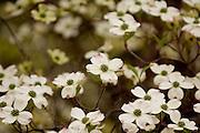 18653Campus Spring
